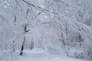 snow_scene_500