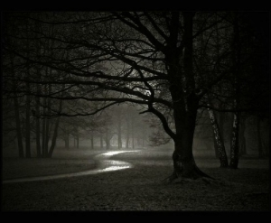 Dark night in Forest