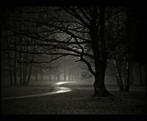Dark night in Forest