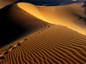 footprints-namib-desert-4021