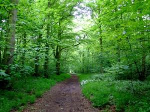 woodland_path_400